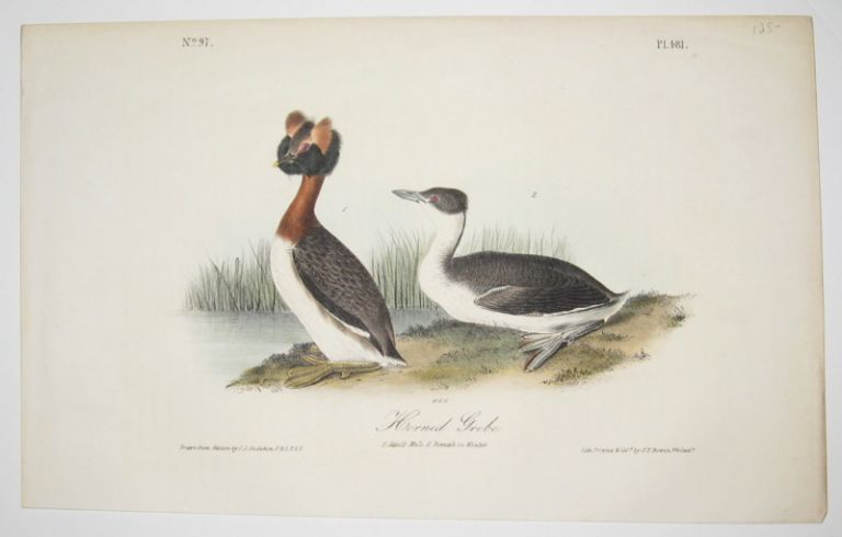 Horned Grebe [Plate 481]. John James AUDUBON.