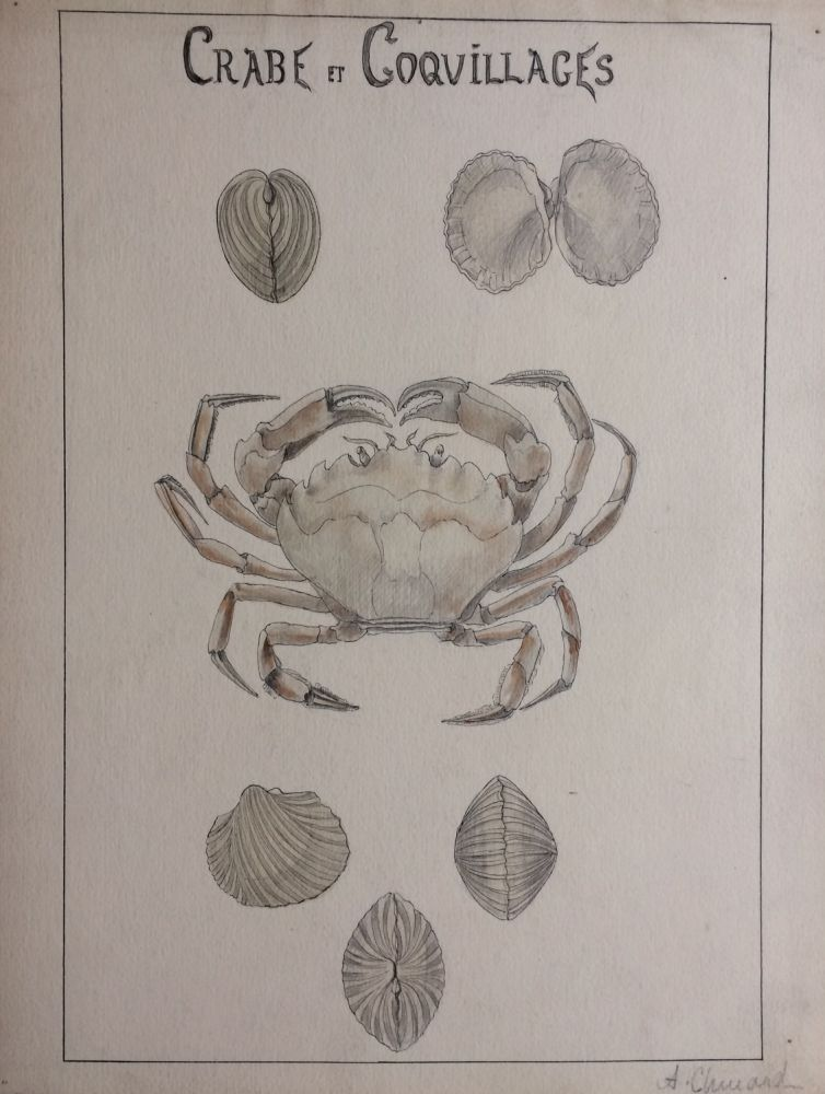 Crabe et Coquillages; Crab and Shells - original drawing. A. Chinard.