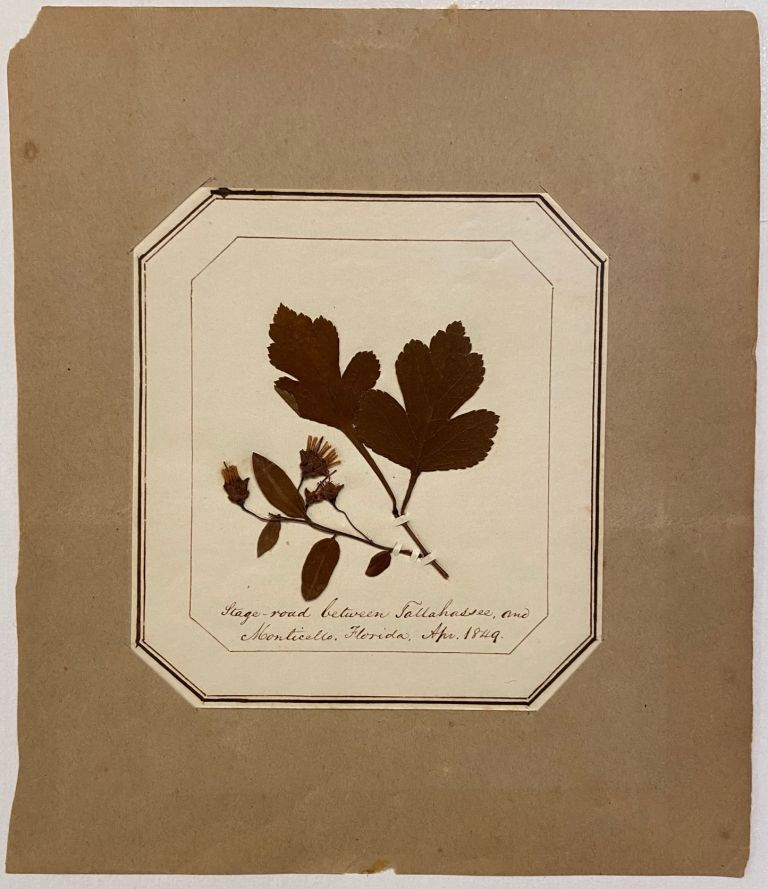 Herbarium; Stage road between Tallahassee, and Monticello Florida. ANONYMOUS.