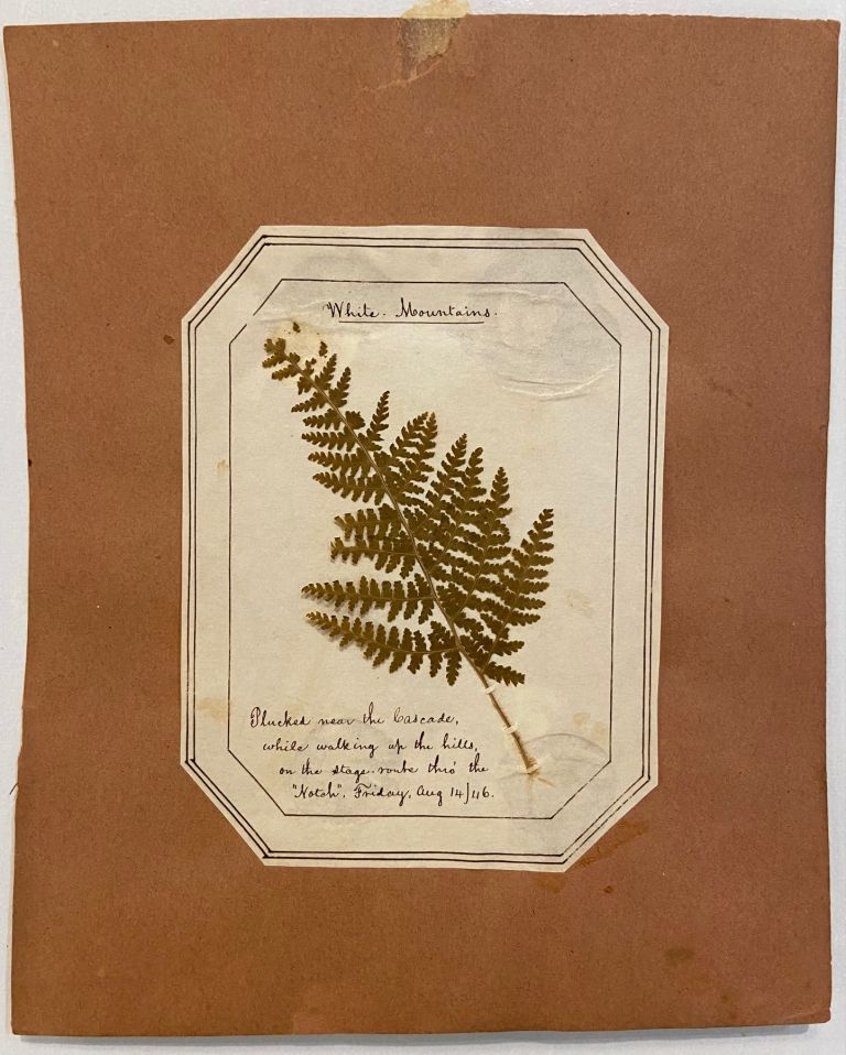 """White Mountains. Plucked near the Cascade, while walking up the hills, on the stage route thro' the """"Notch"""".; Fern Herbarium. ANONYMOUS."""