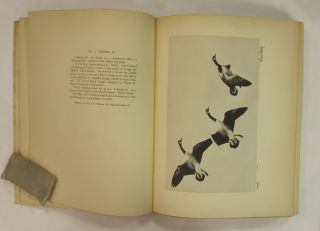 Bishop's Birds: Etchings of Water-Fowl and Upland Game Birds.