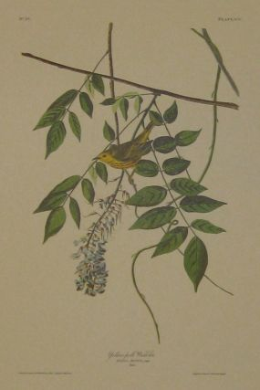 Yellow-poll Warbler, Sylvia Aestiva, Gmel, Male. [Havell 95]. John James AUDUBON.