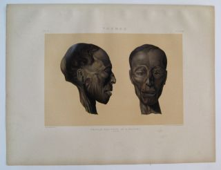 Thebes. Profile and Face of a Mummy. (Man.). Samuel Augustus BINION