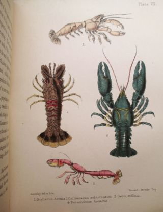 A Popular History of British Crustacea; Comprising a Familiar Account of their Classification and Habits.