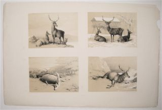 [Various Deer]. ANONYMOUS.