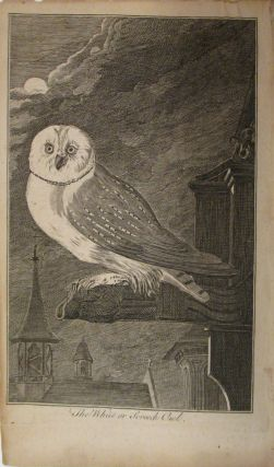 The White or Screech Owl. UNIVERSAL MAGAZINE.