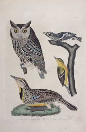 Mottled Owl, Meadow Lark, Black and white Creeper, Pine creeping Warbler. Alexander WILSON.