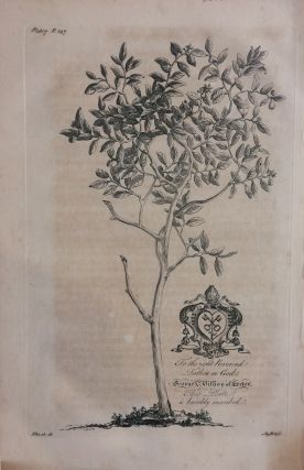 The Forbidden Fruit Tree (Grapefruit Tree) - plate 7 from A Natural History of Barbados. George...