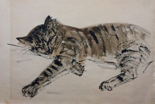 Sleeping Cat; Original ink drawing. Gertrude FREYMAN.