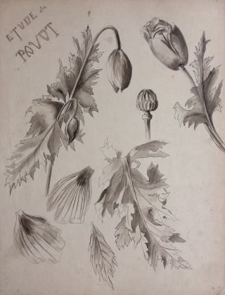Etude du Pavot; Study of Poppies - original drawing. A. Chinard