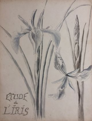 Etude de l'Iris; Study of Irises - original drawing. A. Chinard