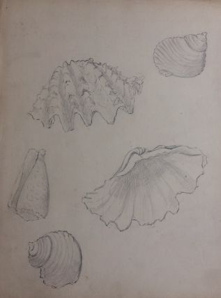 Coquilles; Shells - original drawing. A. Chinard