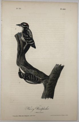Hairy Woodpecker [Plate 262]. John James AUDUBON