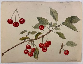 Cherries. A. CHINARD