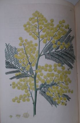 Flora Australasica; or, a Selection of Handsome, or Curious Plants, Natives of New Holland, and the South Sea Islands.